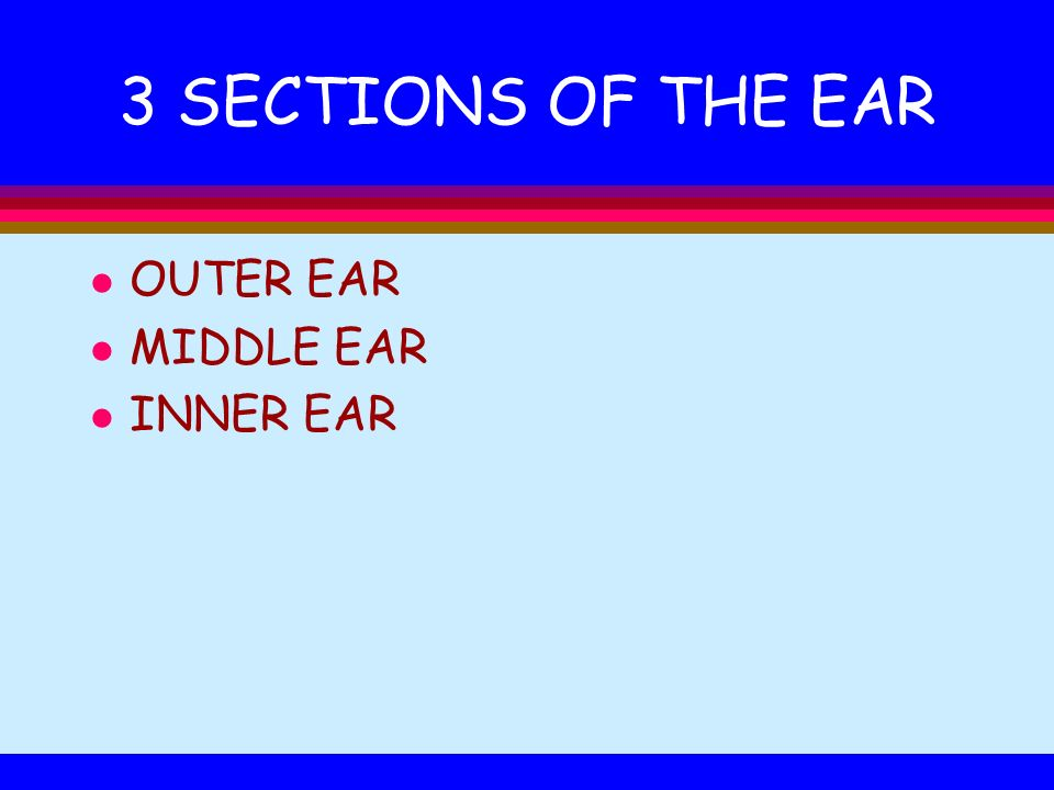 3 SECTIONS OF THE EAR l OUTER EAR l MIDDLE EAR l INNER EAR
