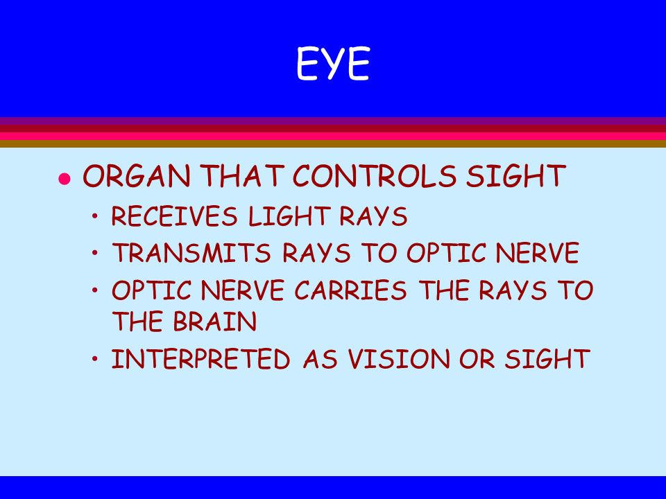 EYE l ORGAN THAT CONTROLS SIGHT RECEIVES LIGHT RAYS TRANSMITS RAYS TO OPTIC NERVE OPTIC NERVE CARRIES THE RAYS TO THE BRAIN INTERPRETED AS VISION OR S