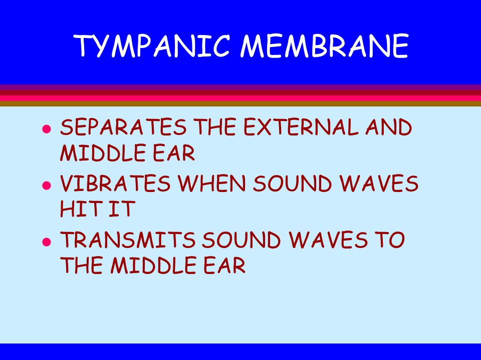 TYMPANIC MEMBRANE l SEPARATES THE EXTERNAL AND MIDDLE EAR l VIBRATES WHEN SOUND WAVES HIT IT l TRANSMITS SOUND WAVES TO THE MIDDLE EAR