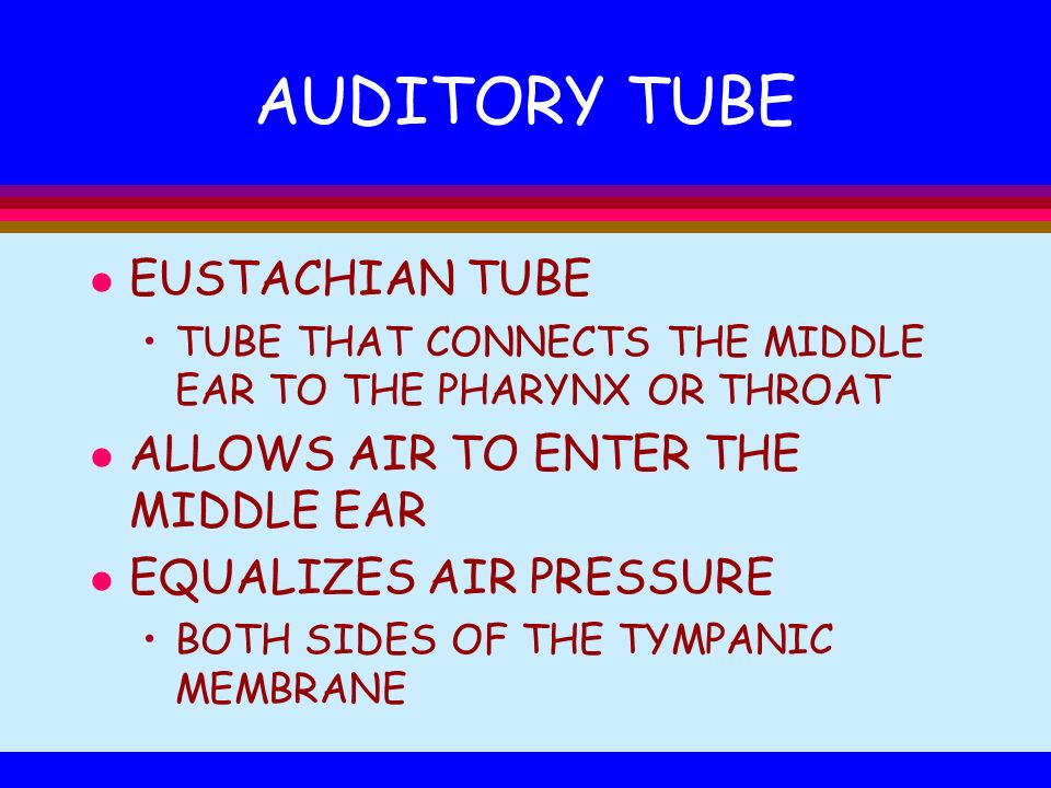 AUDITORY TUBE l EUSTACHIAN TUBE TUBE THAT CONNECTS THE MIDDLE EAR TO THE PHARYNX OR THROAT l ALLOWS AIR TO ENTER THE MIDDLE EAR l EQUALIZES AIR PRESSU