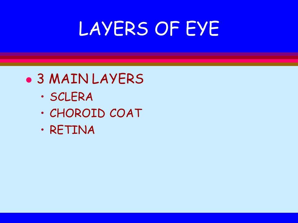 LAYERS OF EYE l 3 MAIN LAYERS SCLERA CHOROID COAT RETINA