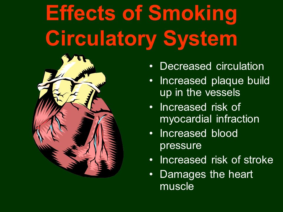 Effects of Smoking Circulatory System Decreased circulation Increased plaque build up in the vessels Increased risk of myocardial infraction Increased
