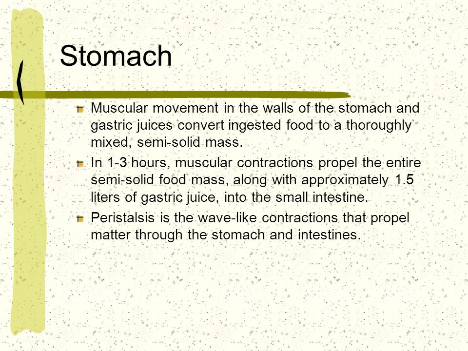 Stomach Muscular movement in the walls of the stomach and gastric juices convert ingested food to a thoroughly mixed, semi-solid mass. In 1-3 hours, m