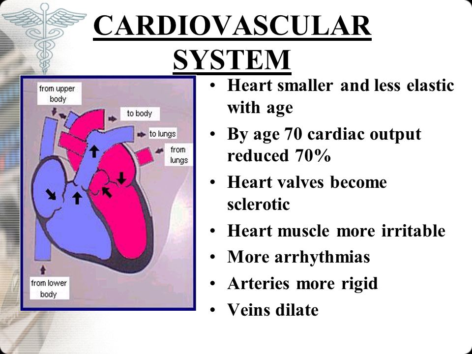 CARDIOVASCULAR SYSTEM Heart smaller and less elastic with age By age 70 cardiac output reduced 70% Heart valves become sclerotic Heart muscle more irr