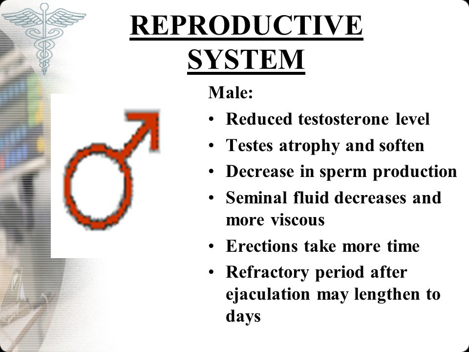 REPRODUCTIVE SYSTEM Male: Reduced testosterone level Testes atrophy and soften Decrease in sperm production Seminal fluid decreases and more viscous E