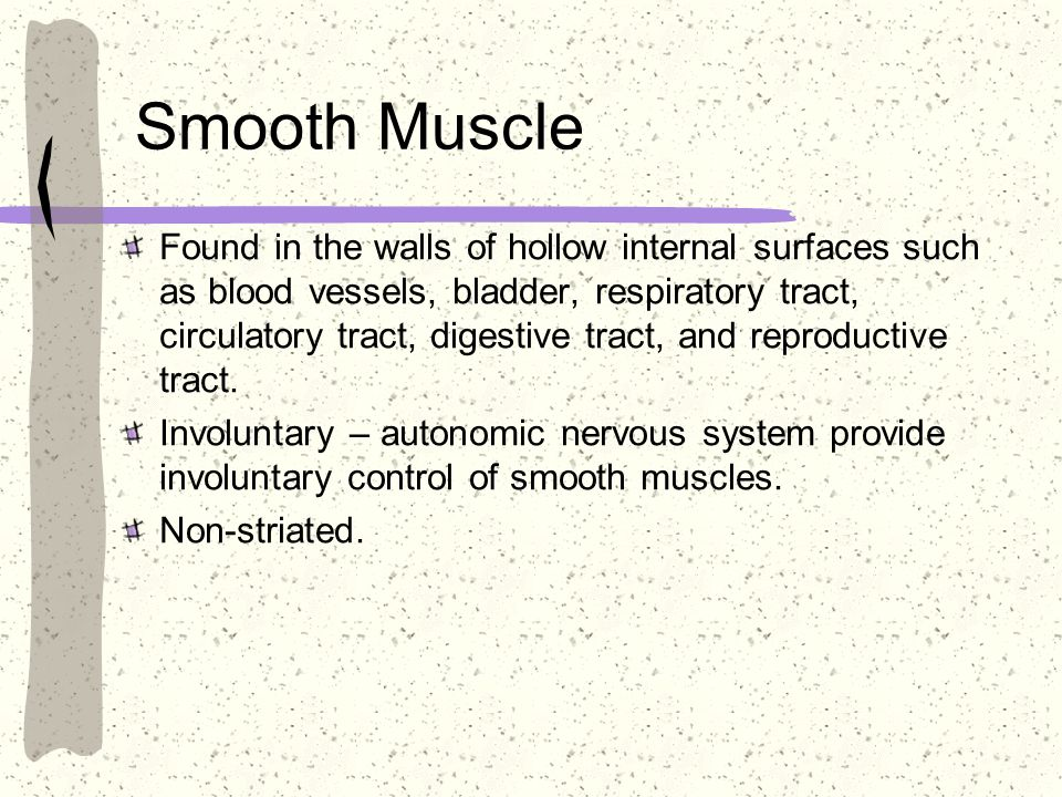 Smooth Muscle Found in the walls of hollow internal surfaces such as blood vessels, bladder, respiratory tract, circulatory tract, digestive tract, an