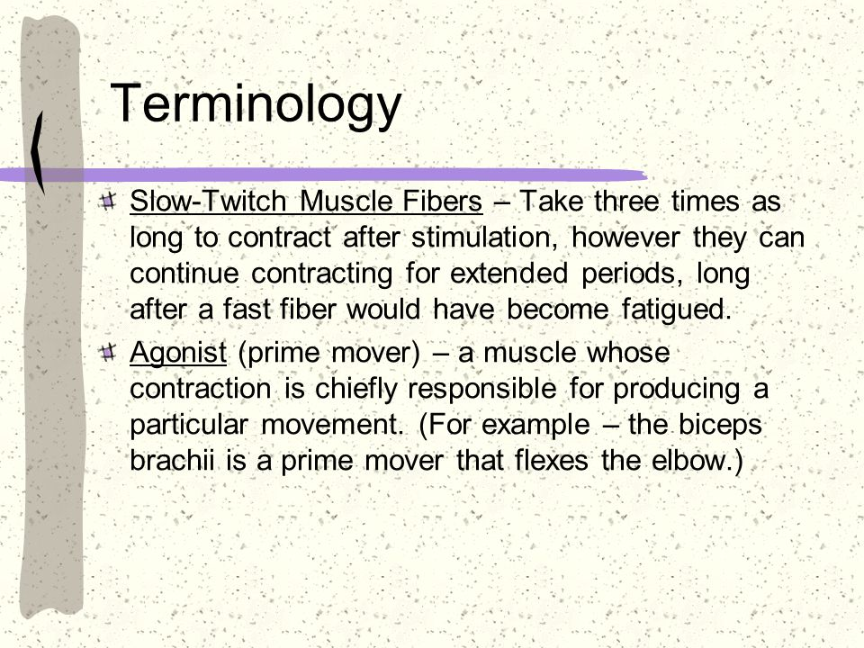 Terminology Slow-Twitch Muscle Fibers – Take three times as long to contract after stimulation, however they can continue contracting for extended per