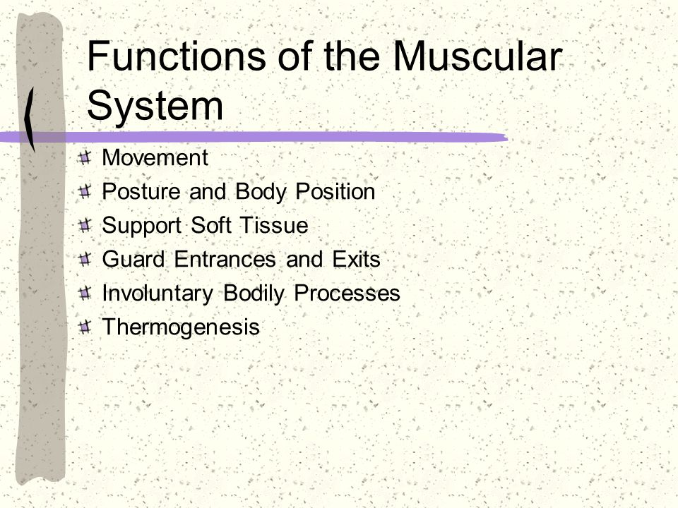 Functions of the Muscular System Movement Posture and Body Position Support Soft Tissue Guard Entrances and Exits Involuntary Bodily Processes Thermog