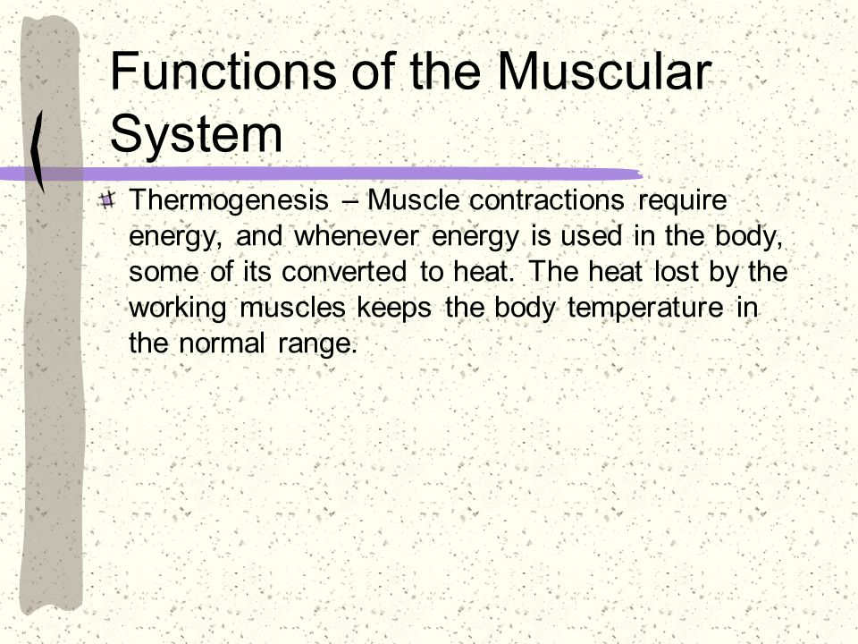 Functions of the Muscular System Thermogenesis – Muscle contractions require energy, and whenever energy is used in the body, some of its converted to