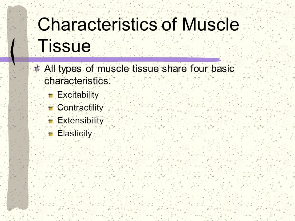 Characteristics of Muscle Tissue All types of muscle tissue share four basic characteristics. Excitability Contractility Extensibility Elasticity