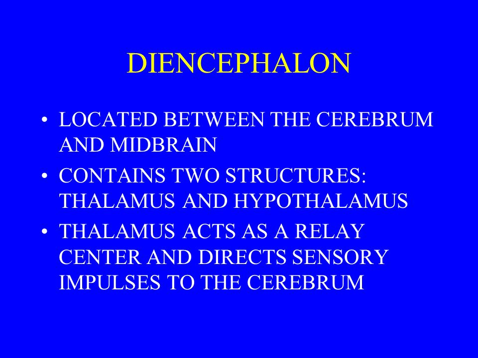 DIENCEPHALON LOCATED BETWEEN THE CEREBRUM AND MIDBRAIN CONTAINS TWO STRUCTURES: THALAMUS AND HYPOTHALAMUS THALAMUS ACTS AS A RELAY CENTER AND DIRECTS SENSORY IMPULSES TO THE CEREBRUM