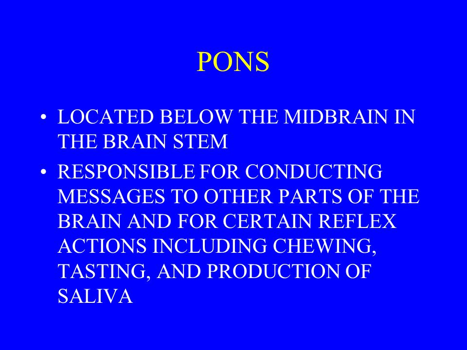 PONS LOCATED BELOW THE MIDBRAIN IN THE BRAIN STEM RESPONSIBLE FOR CONDUCTING MESSAGES TO OTHER PARTS OF THE BRAIN AND FOR CERTAIN REFLEX ACTIONS INCLUDING CHEWING, TASTING, AND PRODUCTION OF SALIVA