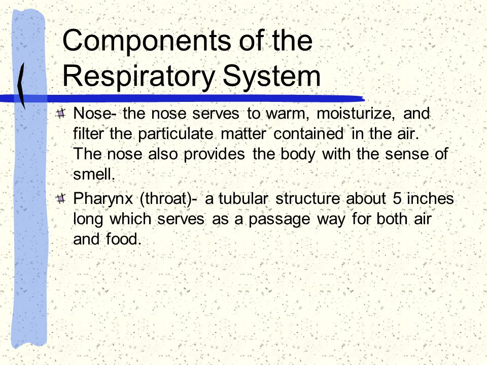 Components of the Respiratory System Nose- the nose serves to warm, moisturize, and filter the particulate matter contained in the air. The nose also