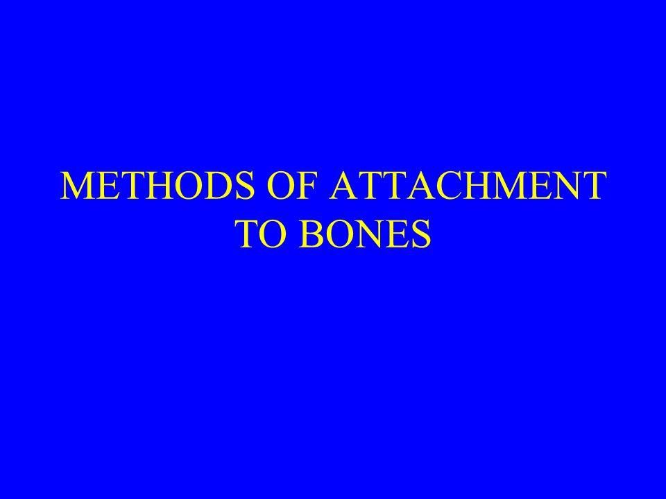 METHODS OF ATTACHMENT TO BONES