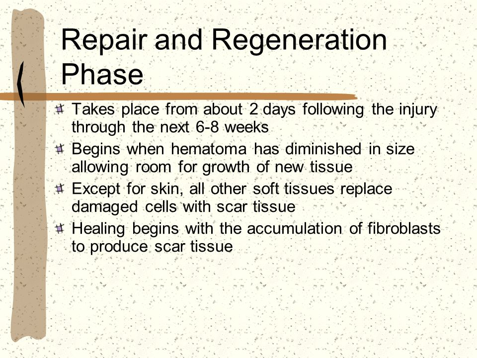 Repair and Regeneration Phase Takes place from about 2 days following the injury through the next 6-8 weeks Begins when hematoma has diminished in siz