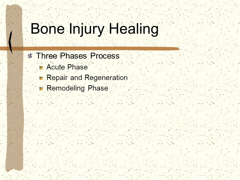 Bone Injury Healing Three Phases Process Acute Phase Repair and Regeneration Remodeling Phase