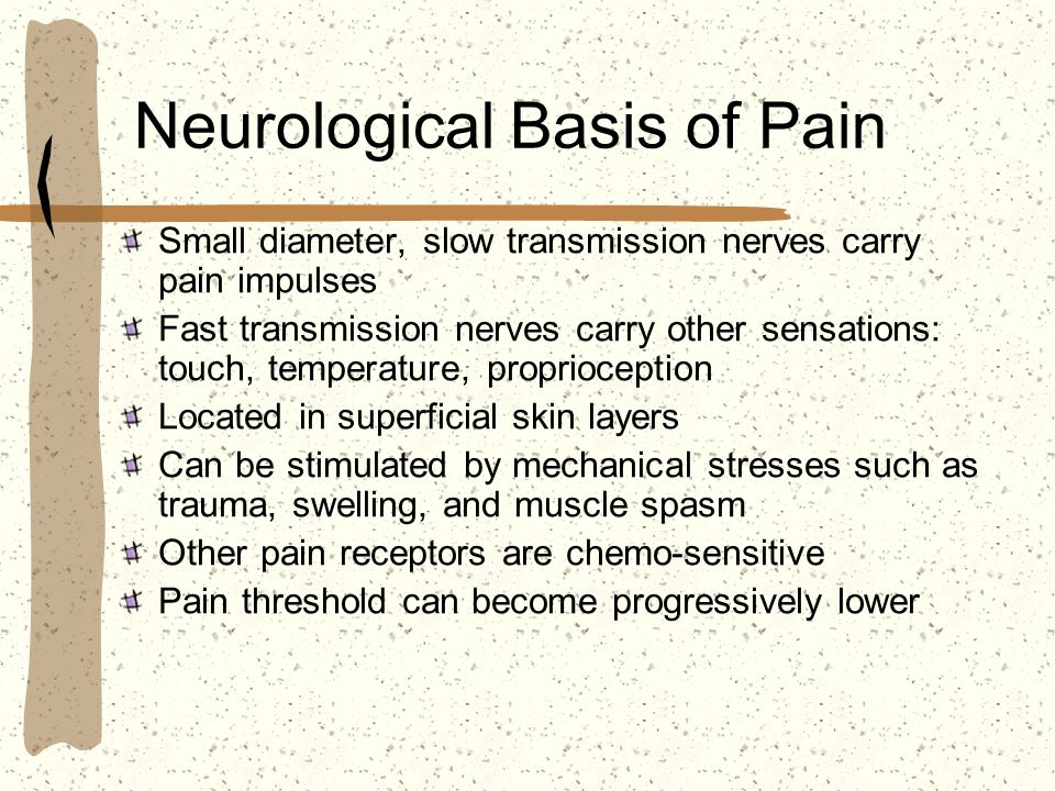 Neurological Basis of Pain Small diameter, slow transmission nerves carry pain impulses Fast transmission nerves carry other sensations: touch, temper
