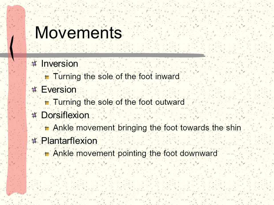 Movements Inversion Turning the sole of the foot inward Eversion Turning the sole of the foot outward Dorsiflexion Ankle movement bringing the foot to