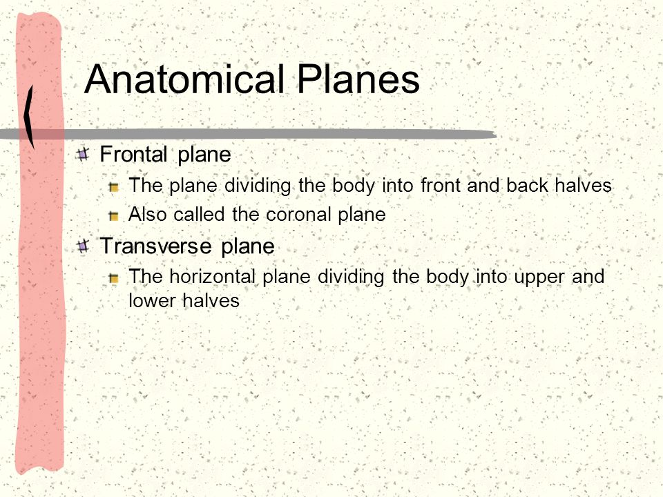 Anatomical Planes Frontal plane The plane dividing the body into front and back halves Also called the coronal plane Transverse plane The horizontal p