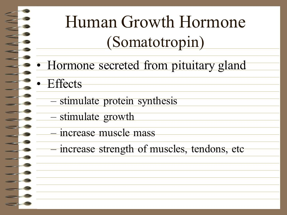 Human Growth Hormone (Somatotropin) Hormone secreted from pituitary gland Effects –stimulate protein synthesis –stimulate growth –increase muscle mass