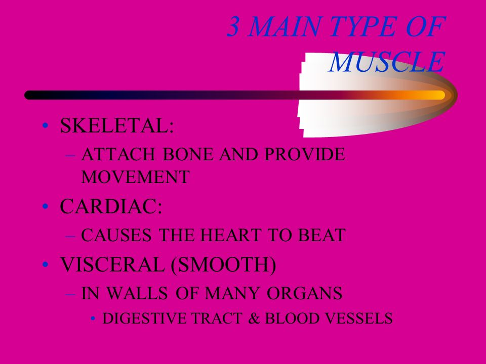 PRODUCES POWER AND MOVEMENT BY CONTRACTION OF MUSCLE FIBERS
