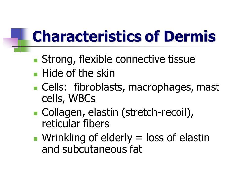 Characteristics of Dermis Strong, flexible connective tissue Hide of the skin Cells: fibroblasts, macrophages, mast cells, WBCs Collagen, elastin (str