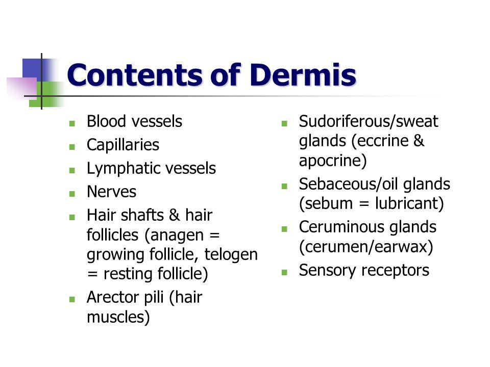 Contents of Dermis Blood vessels Capillaries Lymphatic vessels Nerves Hair shafts & hair follicles (anagen = growing follicle, telogen = resting folli