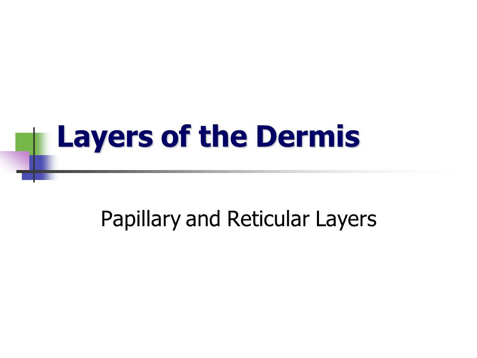 Layers of the Dermis Papillary and Reticular Layers