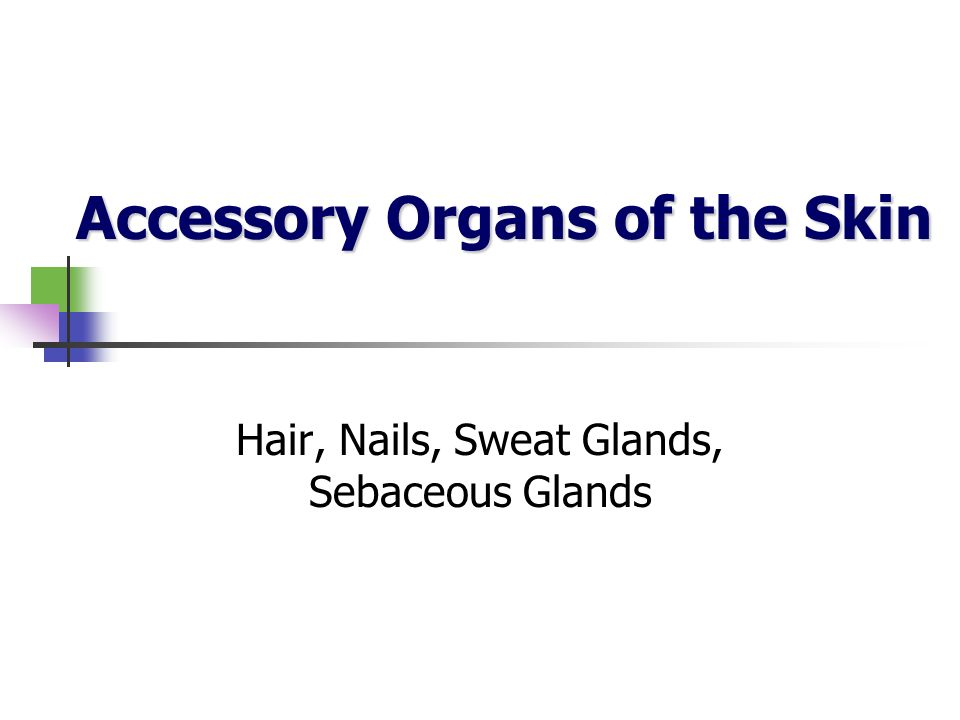 Accessory Organs of the Skin Accessory Organs of the Skin Hair, Nails, Sweat Glands, Sebaceous Glands