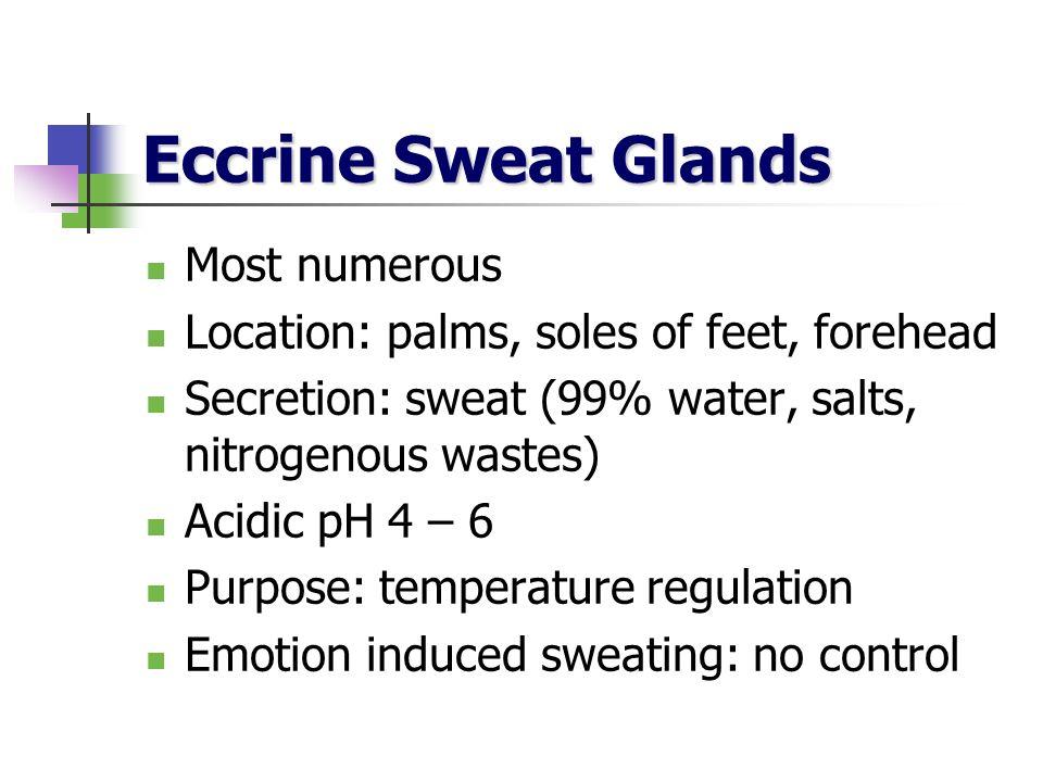 Eccrine Sweat Glands Most numerous Location: palms, soles of feet, forehead Secretion: sweat (99% water, salts, nitrogenous wastes) Acidic pH 4 – 6 Pu