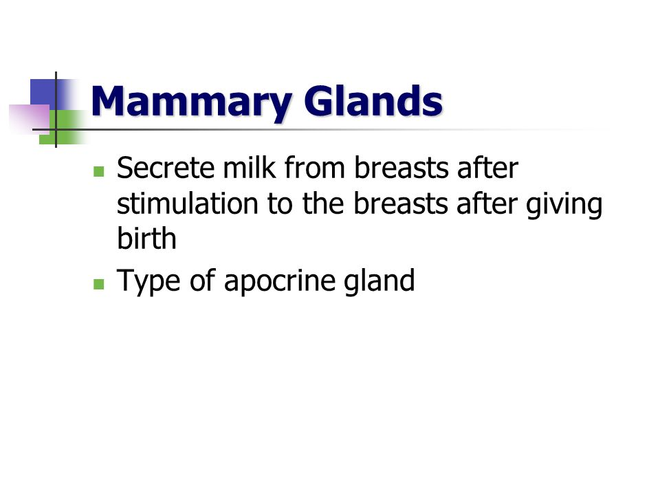 Mammary Glands Secrete milk from breasts after stimulation to the breasts after giving birth Type of apocrine gland