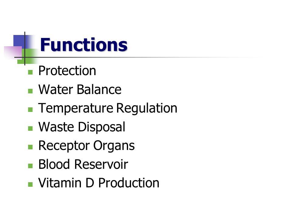Functions Protection Water Balance Temperature Regulation Waste Disposal Receptor Organs Blood Reservoir Vitamin D Production