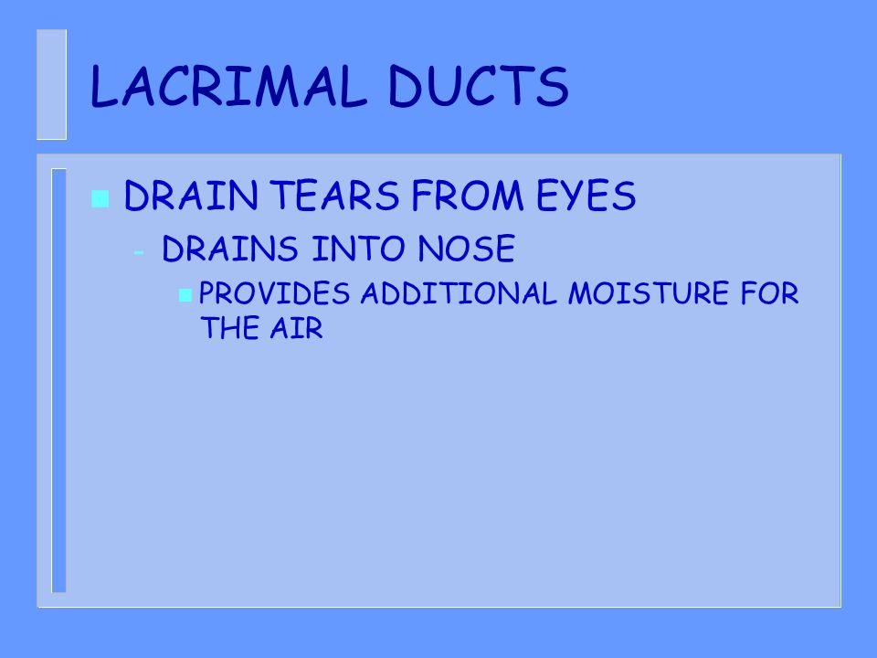 LACRIMAL DUCTS n DRAIN TEARS FROM EYES – DRAINS INTO NOSE n PROVIDES ADDITIONAL MOISTURE FOR THE AIR