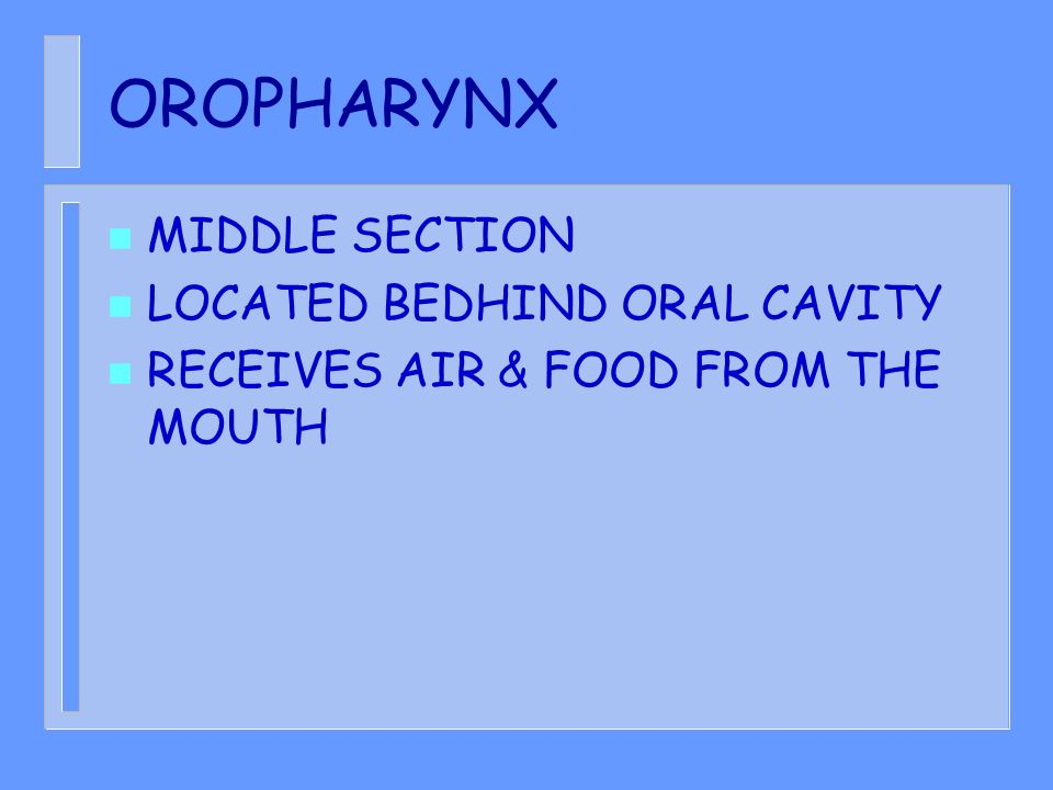 OROPHARYNX n MIDDLE SECTION n LOCATED BEDHIND ORAL CAVITY n RECEIVES AIR & FOOD FROM THE MOUTH