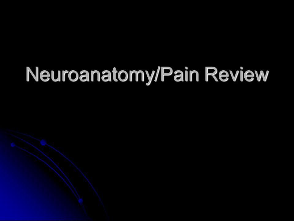 Neuroanatomy/Pain Review