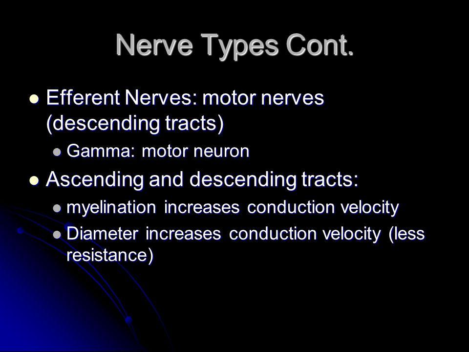 Nerve Types Cont. Efferent Nerves: motor nerves (descending tracts) Efferent Nerves: motor nerves (descending tracts) Gamma: motor neuron Gamma: motor