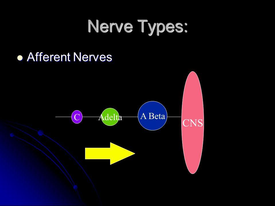 Nerve Types: Afferent Nerves Afferent Nerves CNS A Beta Adelta C