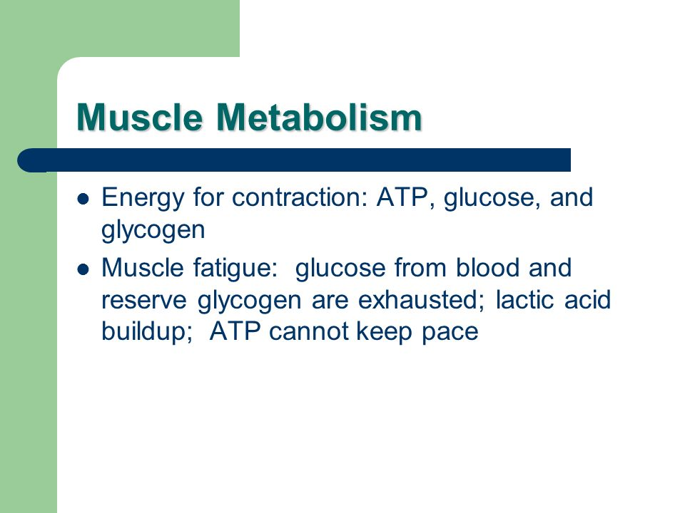 Muscle Metabolism Energy for contraction: ATP, glucose, and glycogen Muscle fatigue: glucose from blood and reserve glycogen are exhausted; lactic aci