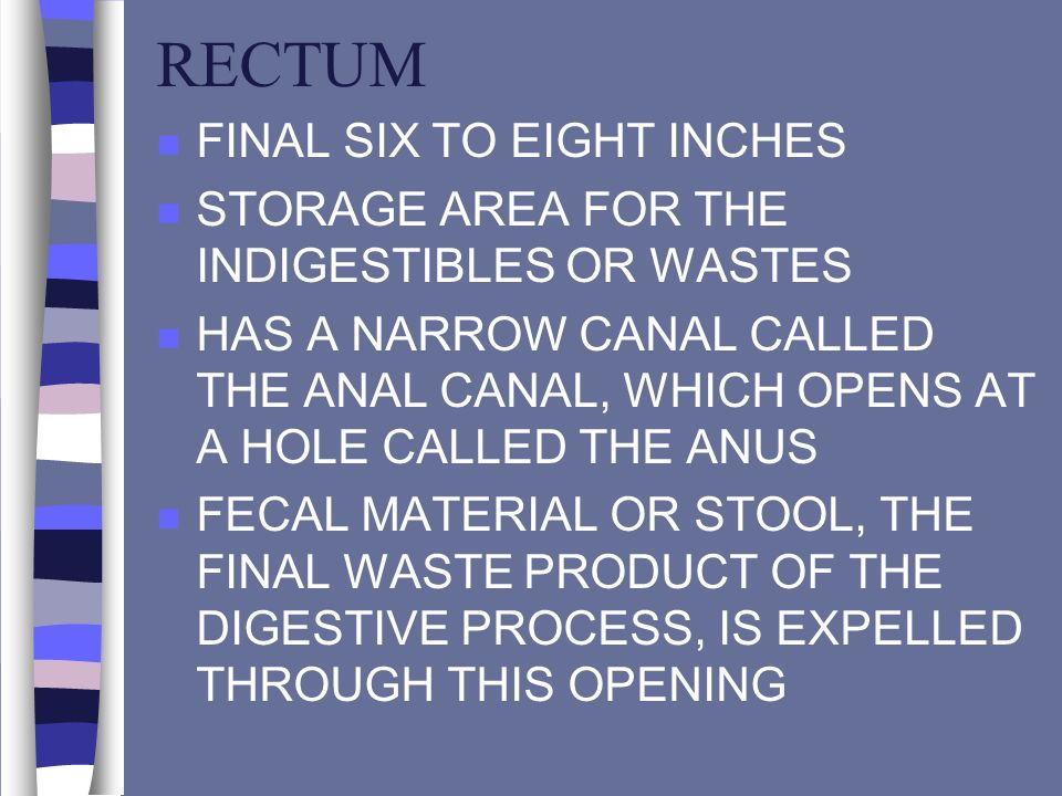 RECTUM n FINAL SIX TO EIGHT INCHES n STORAGE AREA FOR THE INDIGESTIBLES OR WASTES n HAS A NARROW CANAL CALLED THE ANAL CANAL, WHICH OPENS AT A HOLE CA
