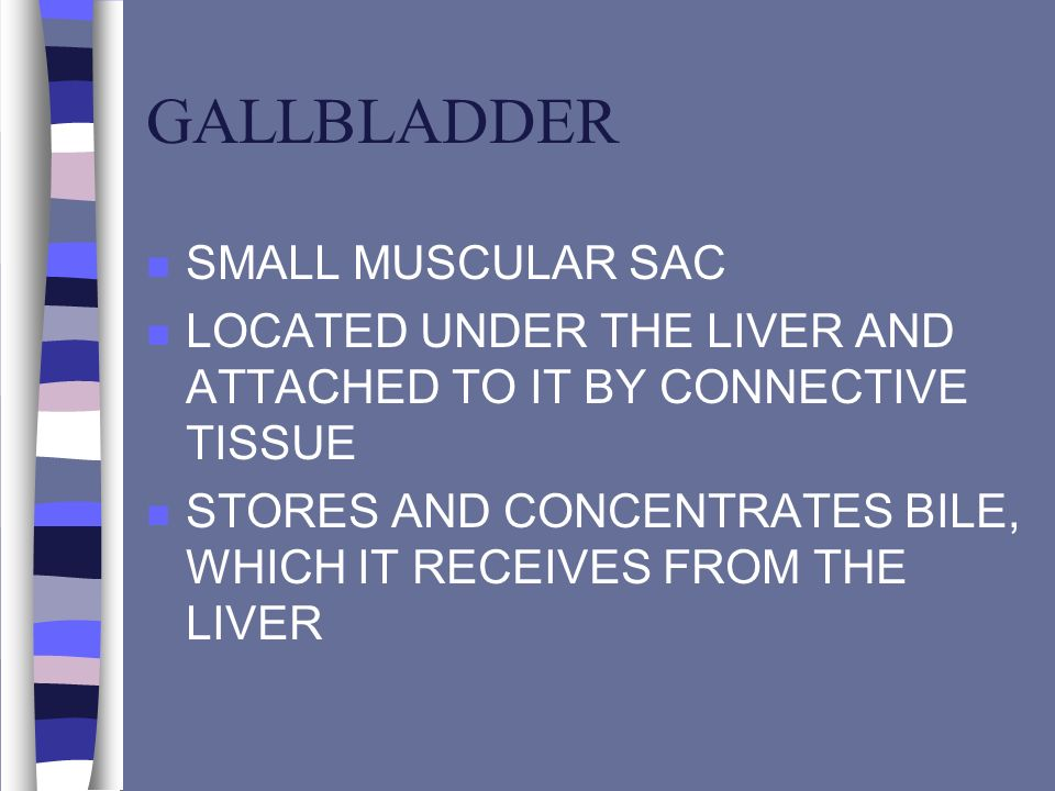 GALLBLADDER n SMALL MUSCULAR SAC n LOCATED UNDER THE LIVER AND ATTACHED TO IT BY CONNECTIVE TISSUE n STORES AND CONCENTRATES BILE, WHICH IT RECEIVES F
