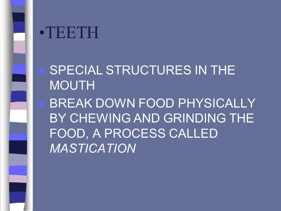 TEETH n SPECIAL STRUCTURES IN THE MOUTH n BREAK DOWN FOOD PHYSICALLY BY CHEWING AND GRINDING THE FOOD, A PROCESS CALLED MASTICATION