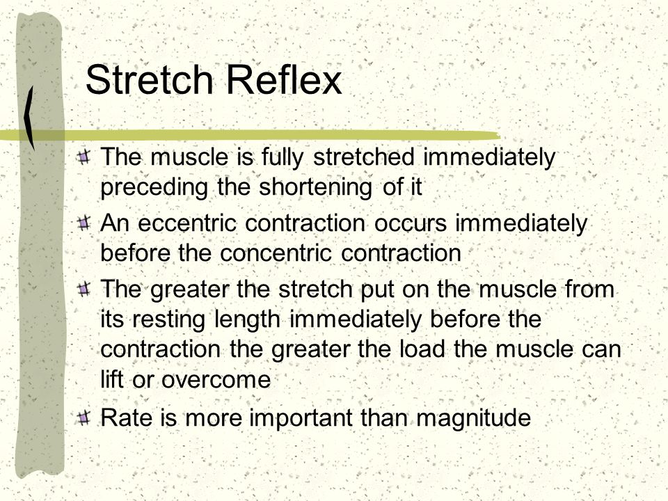 Stretch Reflex The muscle is fully stretched immediately preceding the shortening of it An eccentric contraction occurs immediately before the concent