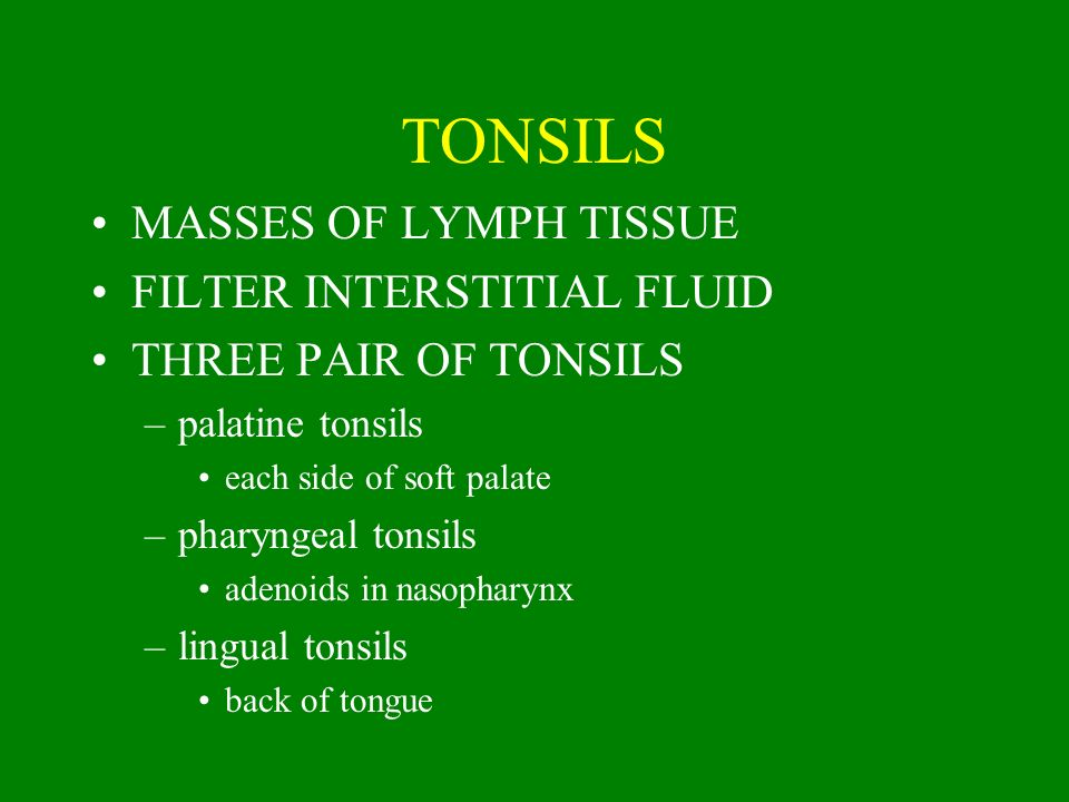 TONSILS MASSES OF LYMPH TISSUE FILTER INTERSTITIAL FLUID THREE PAIR OF TONSILS –palatine tonsils each side of soft palate –pharyngeal tonsils adenoids