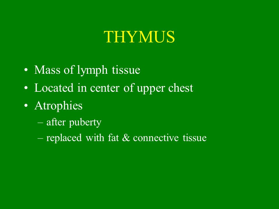 THYMUS Mass of lymph tissue Located in center of upper chest Atrophies –after puberty –replaced with fat & connective tissue