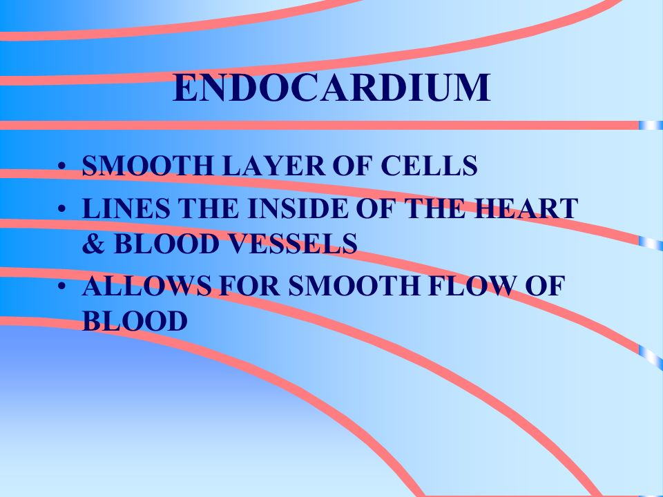 ENDOCARDIUM SMOOTH LAYER OF CELLS LINES THE INSIDE OF THE HEART & BLOOD VESSELS ALLOWS FOR SMOOTH FLOW OF BLOOD
