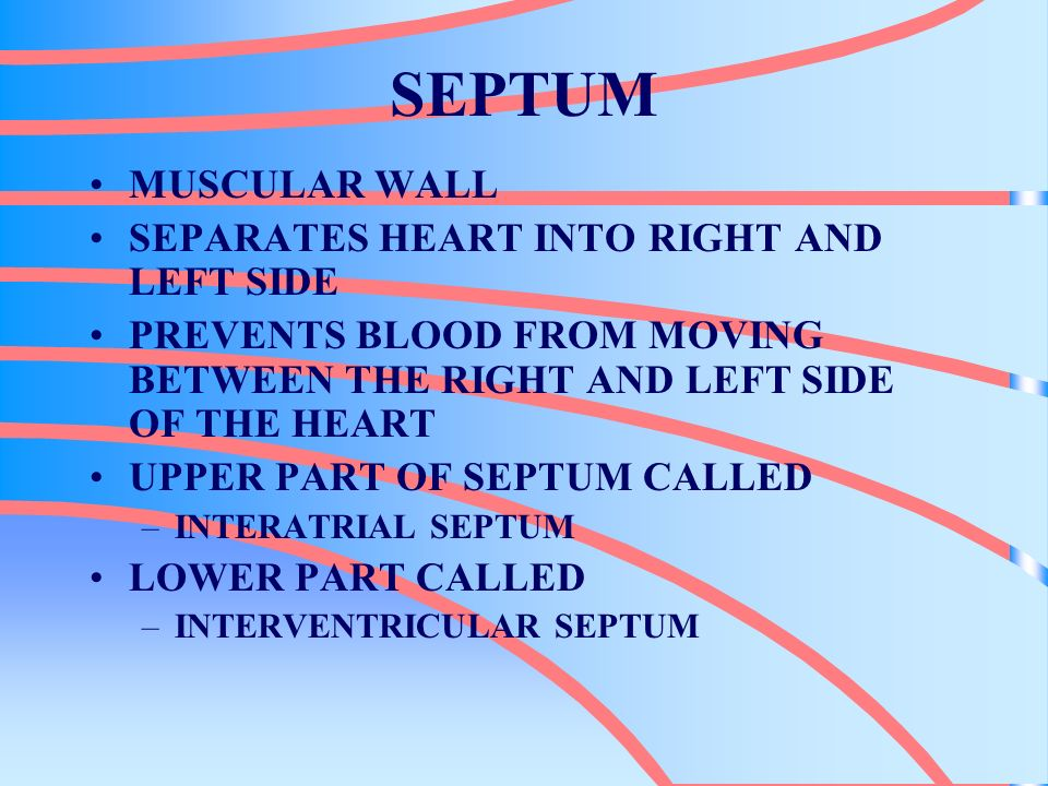 SEPTUM MUSCULAR WALL SEPARATES HEART INTO RIGHT AND LEFT SIDE PREVENTS BLOOD FROM MOVING BETWEEN THE RIGHT AND LEFT SIDE OF THE HEART UPPER PART OF SE