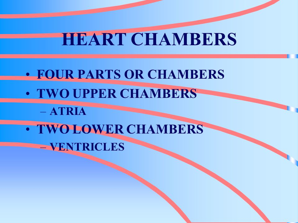HEART CHAMBERS FOUR PARTS OR CHAMBERS TWO UPPER CHAMBERS –ATRIA TWO LOWER CHAMBERS –VENTRICLES