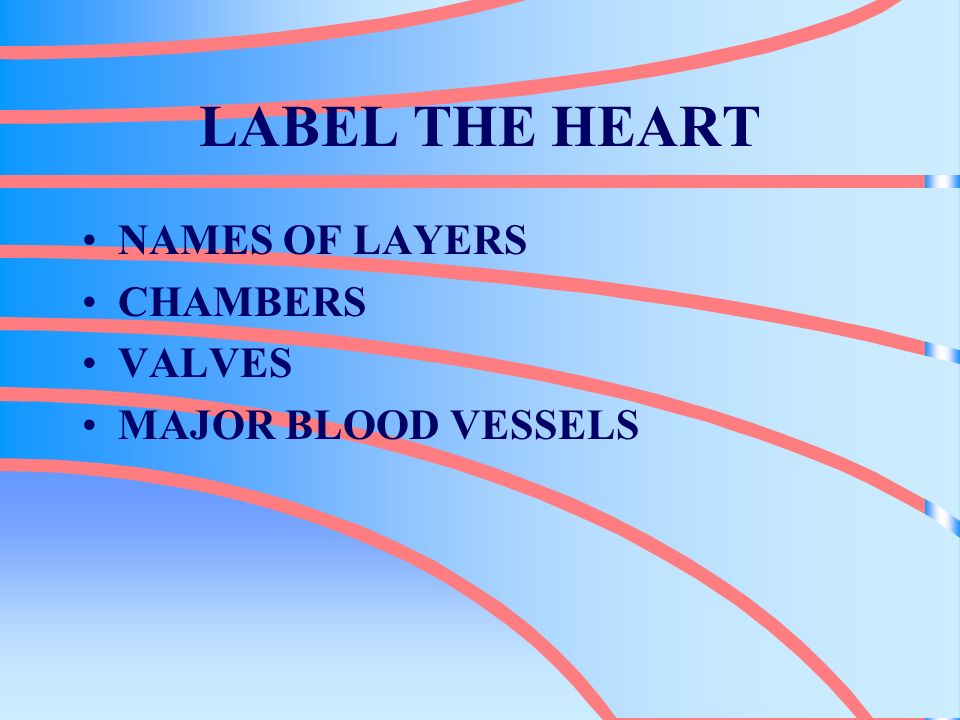 CARDIOVASCULAR SYSTEM ALSO KNOW AS CIRCULATORY SYSTEM