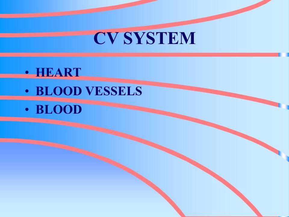VALVES TRICUSPID VALVE –RIGHT ATRIUM & RIGHT VENTRICLE PULMONARY VALVE –RIGHT VENTRICLE AND PULMONARY ARTERY