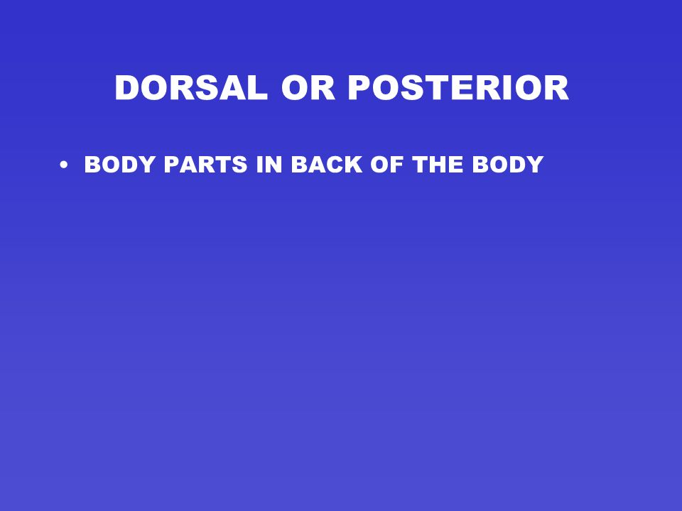 VENTRAL OR ANTERIOR BODY PARTS IN FRONT OF THE BODY